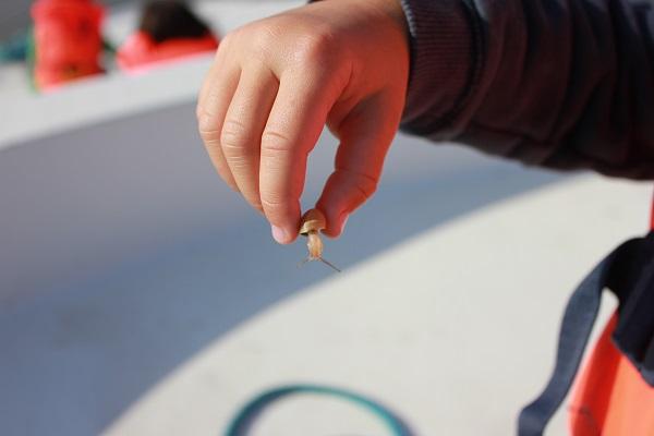 petit escargot ...