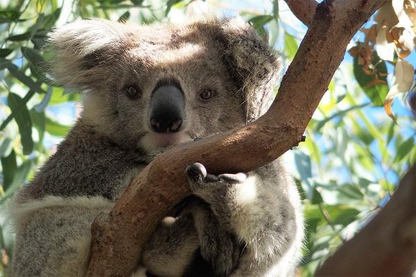 voyage australie enfants